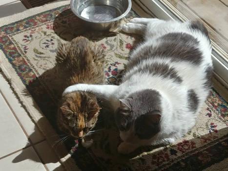 Ooska and Rosie #2