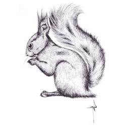Squirrel by NadiaVess