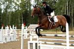Horse Trials Stock 23