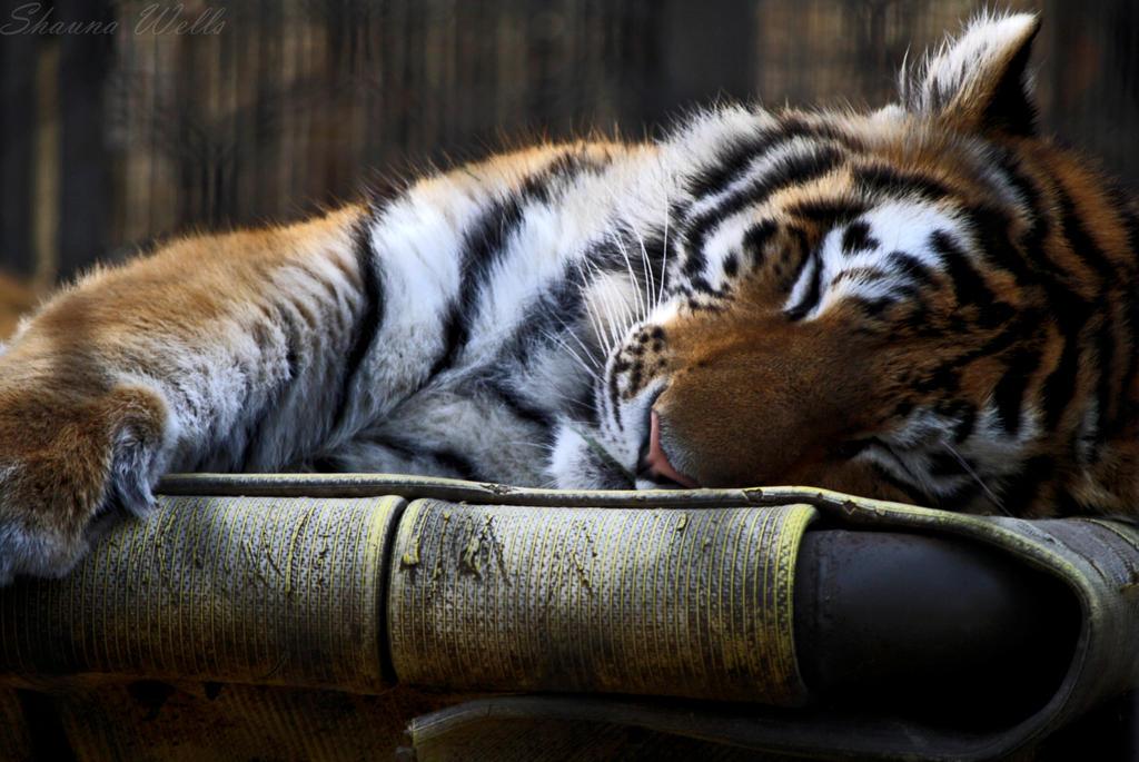 Sleepy by HandHugsFTW