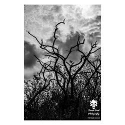 Moody tree silhouettes