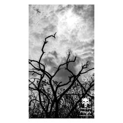 Moody tree silhouette