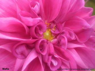 flower 3 by maraxmarax