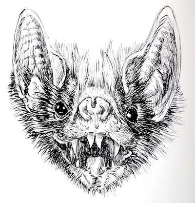 Vampire Bat by Hirschler on DeviantArt