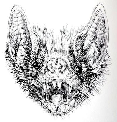 Vampire Bat by Hirschler on DeviantArt