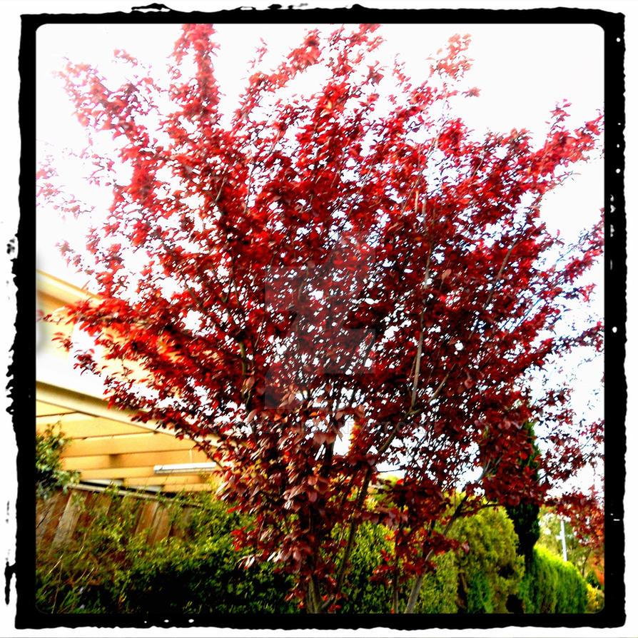 Scarlet Tree by Lorzzy