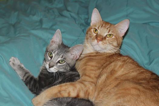 Chris and Obi