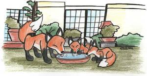 Fox Garden by FreyFox