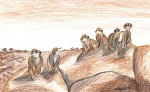 Meerkat Mob by FreyFox