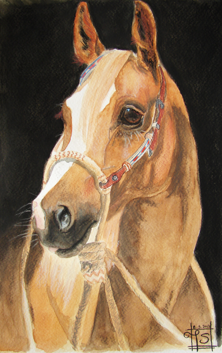 Indian Horse by excaite