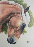 Horse traditional by excaite