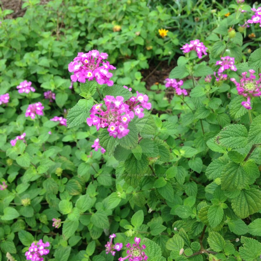 Flores del Recinto by wiciwiciwictor