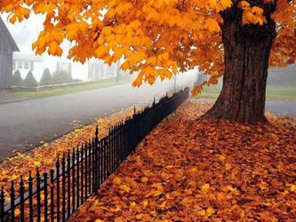 Autumn 16 by zaccool14