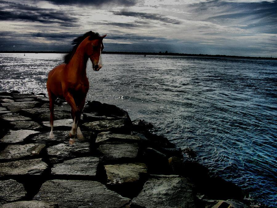 ^ Twilightstars ^ horses Horse_Manip_4_by_xxstardust10xx