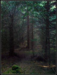 lost in a fairy woods by czmartin