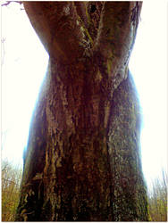 a giant by czmartin