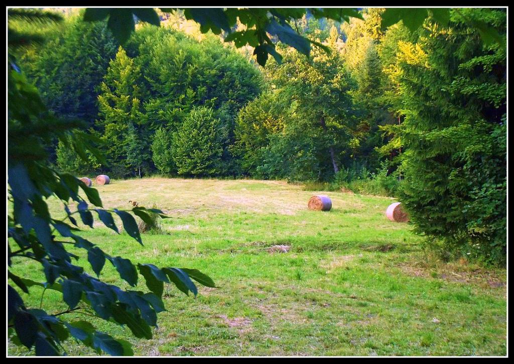 idyllic summer scenery by czmartin
