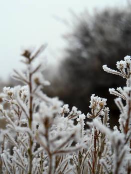 Coat of Frost