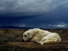 Resting Before the Storm