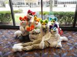Rainbow Huskies! for sale 3
