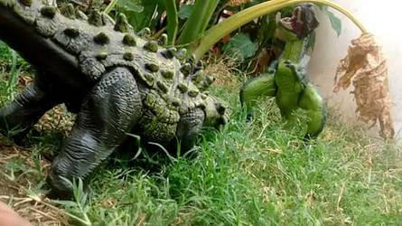 Ankilosaurus vs tiranosaurus rex by preistoricblue