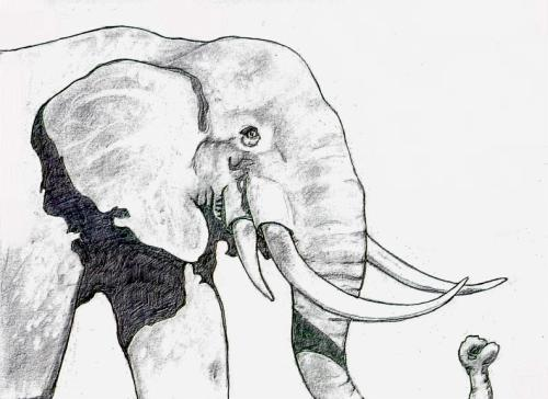 the four tusked elephant There are four recognized subspecies of asian elephants, the sri lankan  they  had two downward-curved tusks in their upper jaw and two straight tusks in.