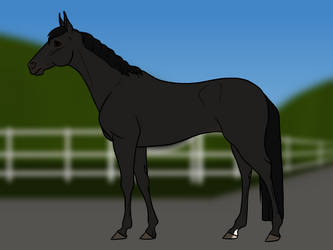 GR's Black Betty [Reference Sheet] by Rising-Star-Farm