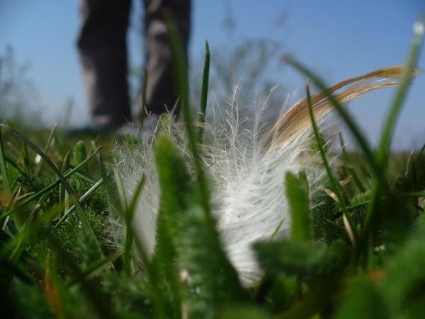 flake in the grass by pisikspanzuratadebec on DeviantArt