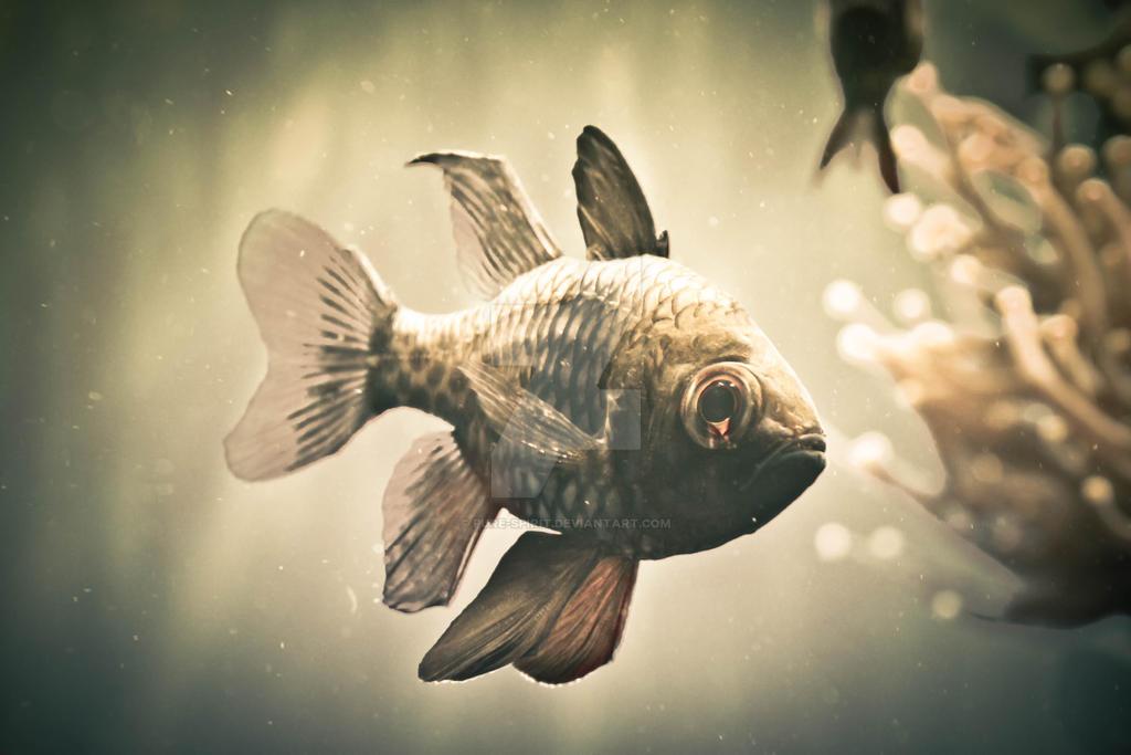 Mini Piranha by pure-spirit