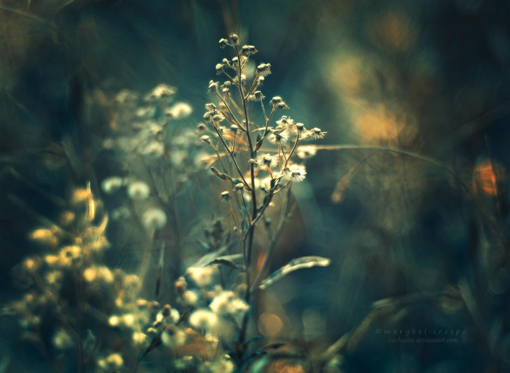 golden by Cochalita