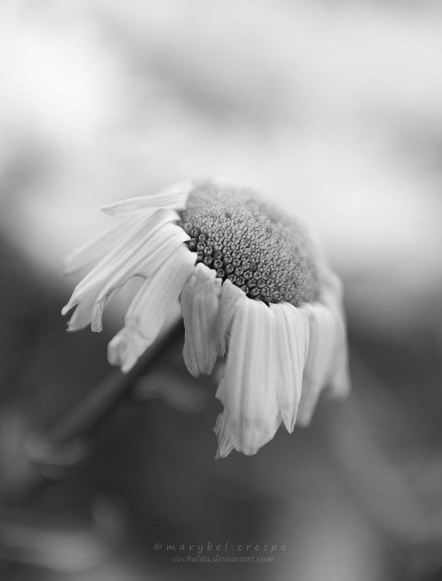 sweet melancholy by Cochalita