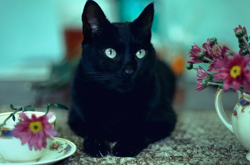still life cat by Cochalita