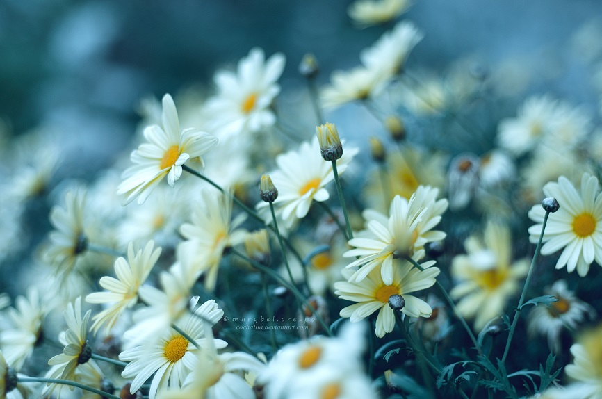 bring me joy by Cochalita