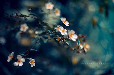 Florecillas by Cochalita