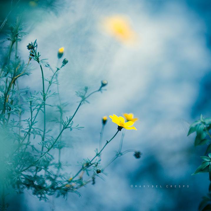 blue shadows by Cochalita