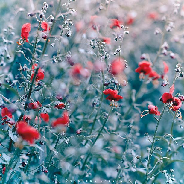 wild flowers by Cochalita