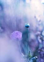 Poppy by Cochalita