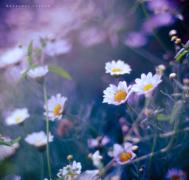 Awakening to a new day by Cochalita