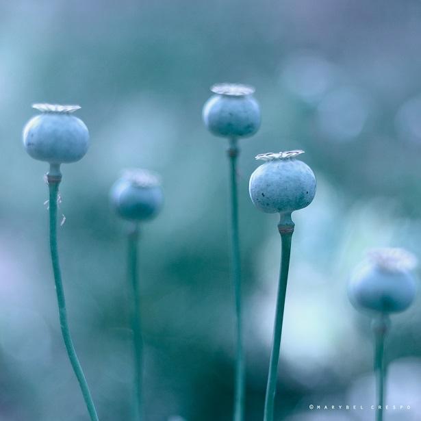 Blue seeds by Cochalita