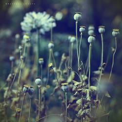 Precious things by Cochalita