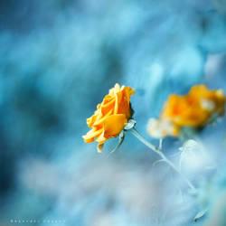 Isolation by Cochalita