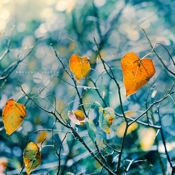 winter leaves by Cochalita