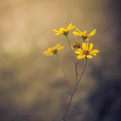 Little wild flowers by Cochalita