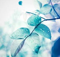 Rainy days by Cochalita