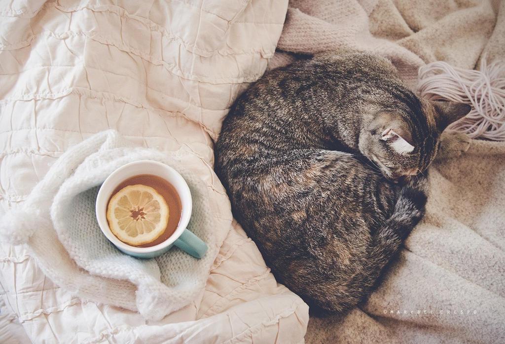 Taking a nap by Cochalita