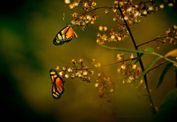 Spring winds  for butterflies