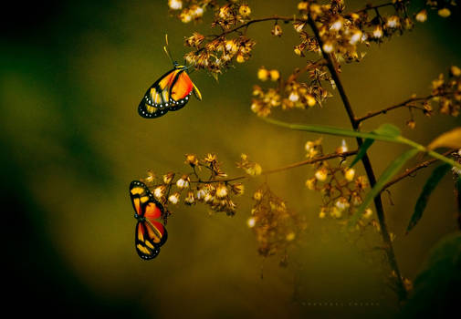 Spring winds  for butterflies