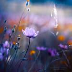 Flushing purples by Cochalita