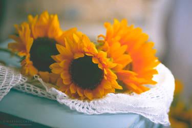 Soft sunflowers