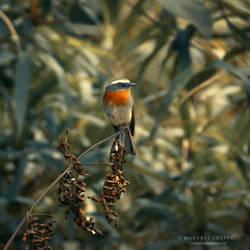 Little bird in Autumn